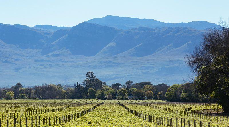 Rota de Vinhos na África dos Sul